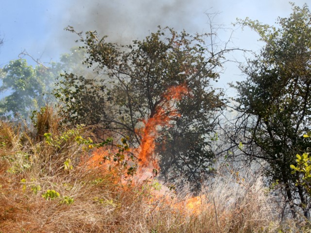 Grass fire on Cape Pallarenda