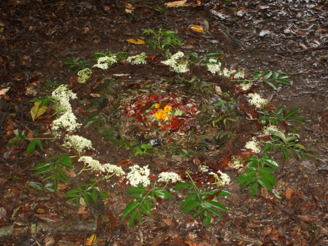 Leaf-litter mandala
