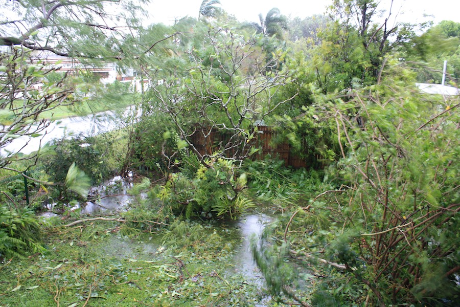 Flooded, debris-strewn garden after Yasi
