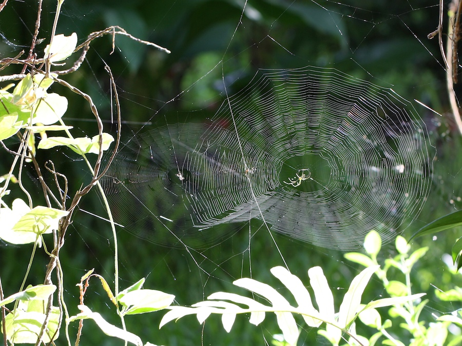 Webs catching the sun