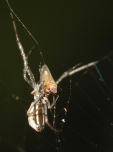 Spider and prey