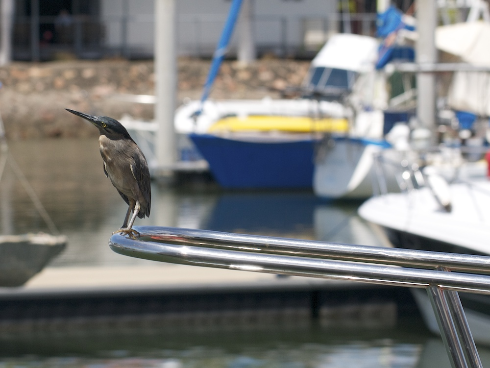 dark bird on boat railing