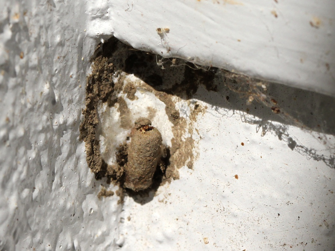 Wasp nest in final state