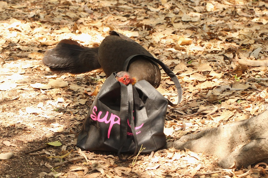scrub turkey with head in shopping bag