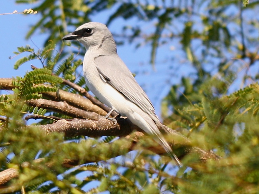 grey bird on branch