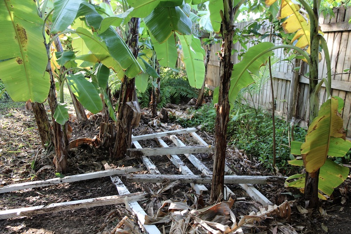 grid of planks under banana plants