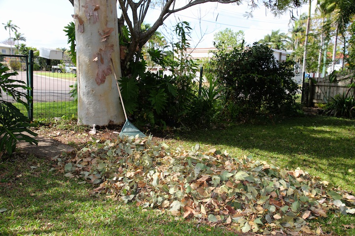 mound of leaves on lawn