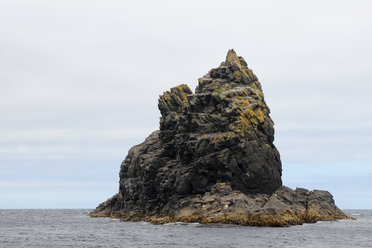 rocky islet with seals