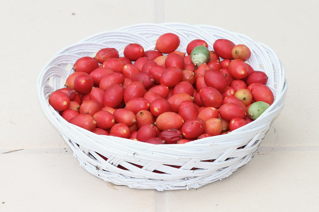 red fruit in cane bowl