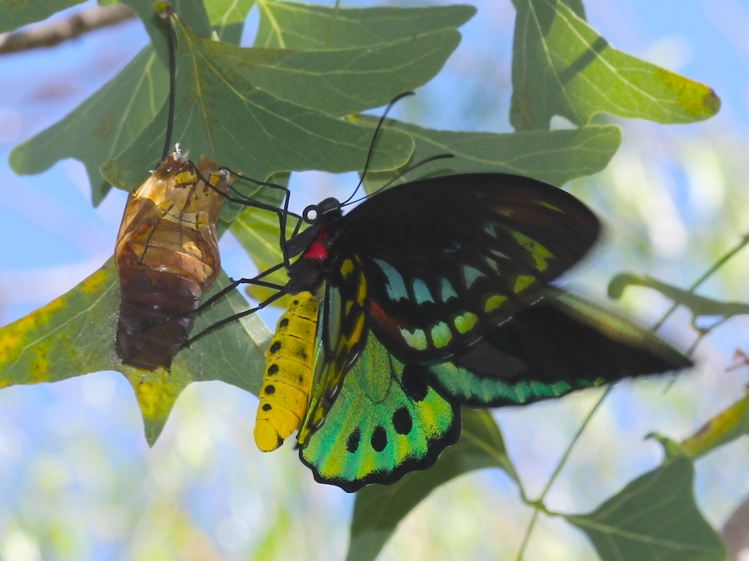 green and black butterfly flapping its wings