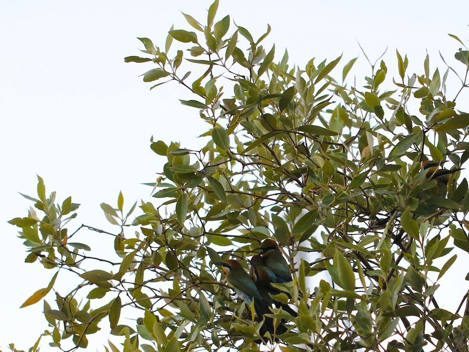 birds in foliage