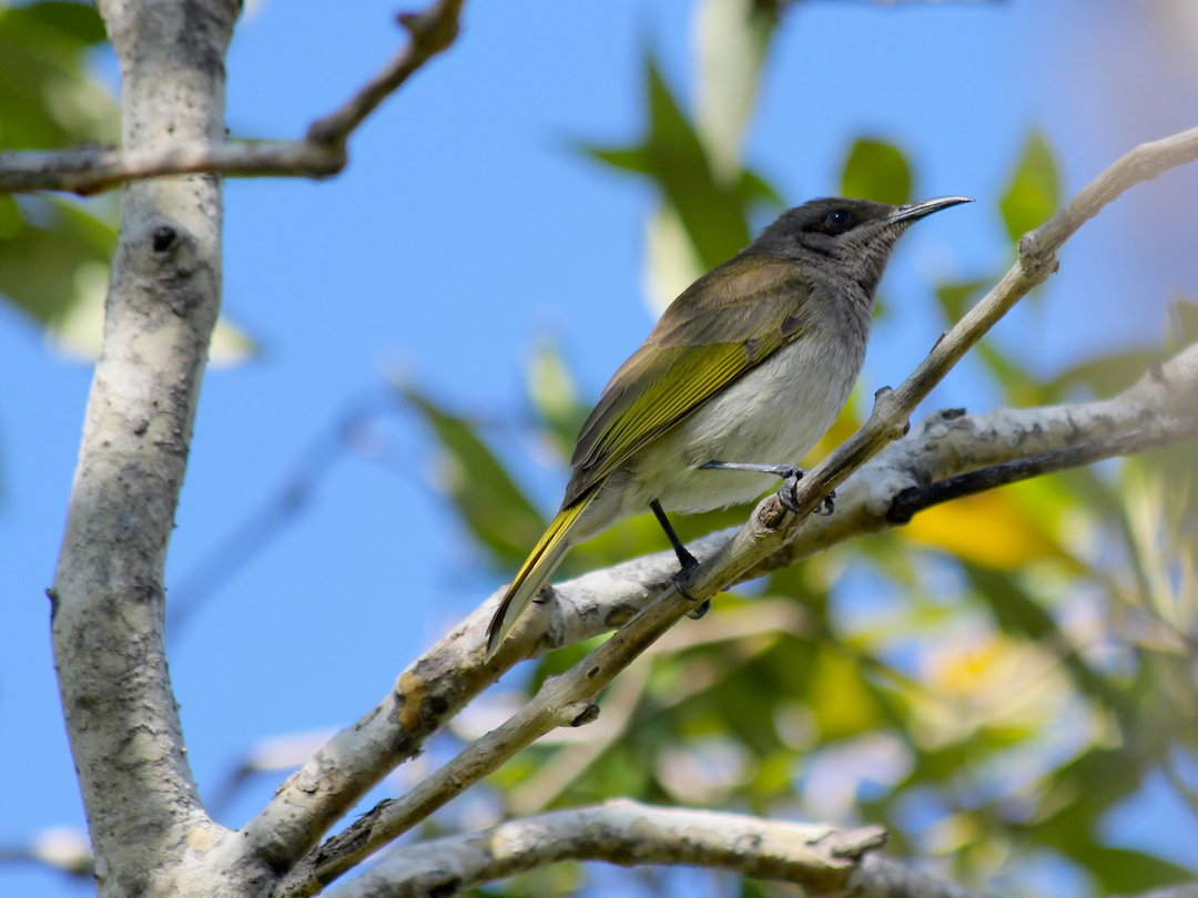 small olive-brown bird in branches
