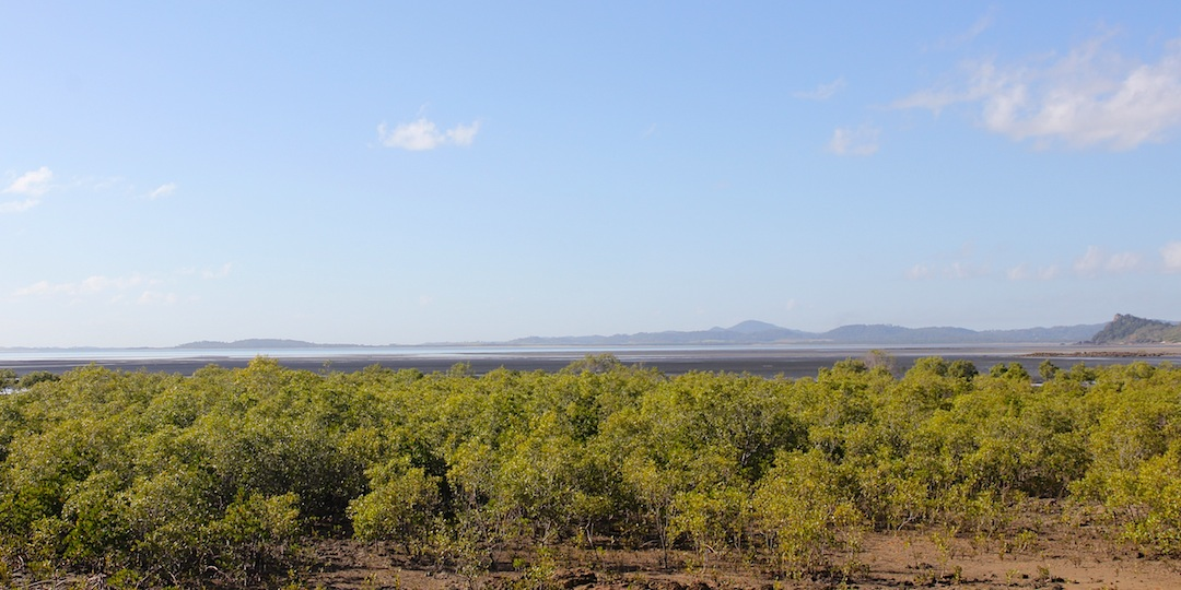 looking across mangroves to a bay
