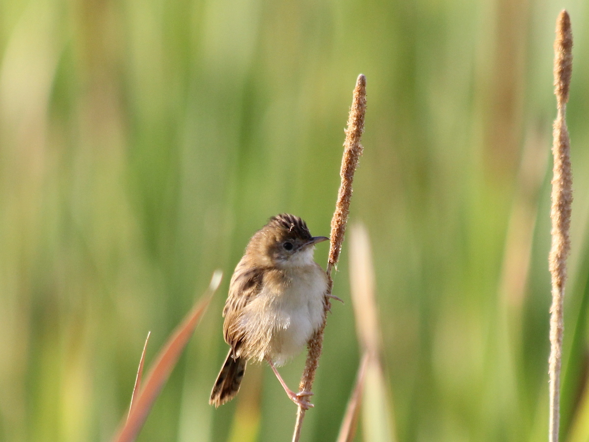 brown bird on grass stem