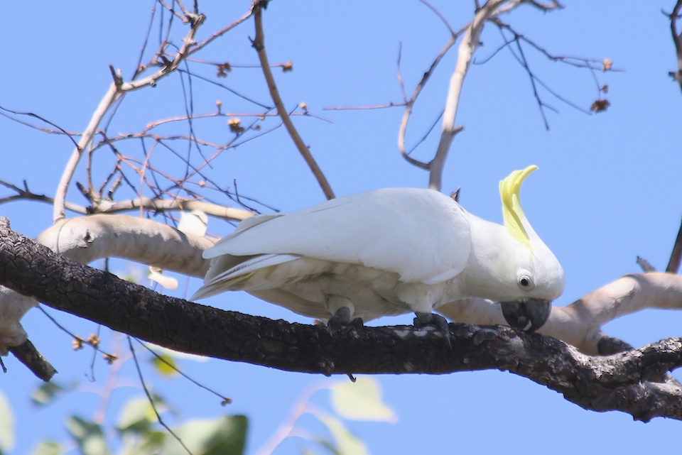white bird on branch