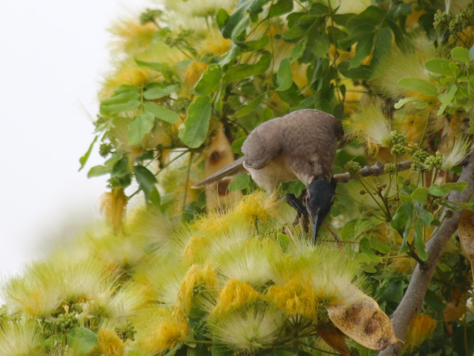 brown bird with yellow flowers