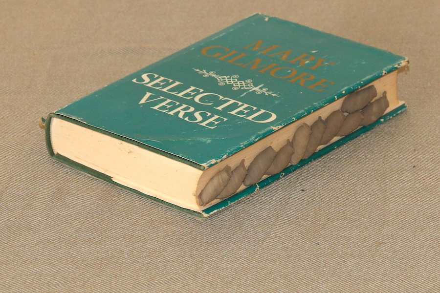 mud wasp nests on book