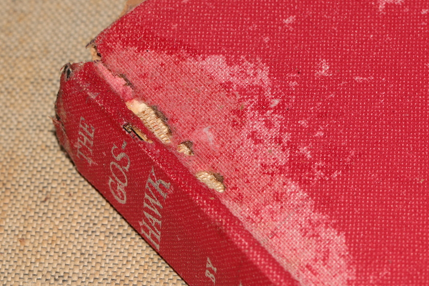 book eaten by silverfish