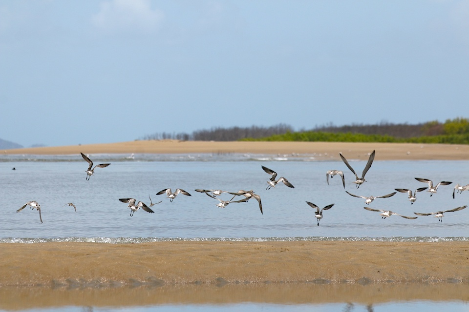ross river mouth birds