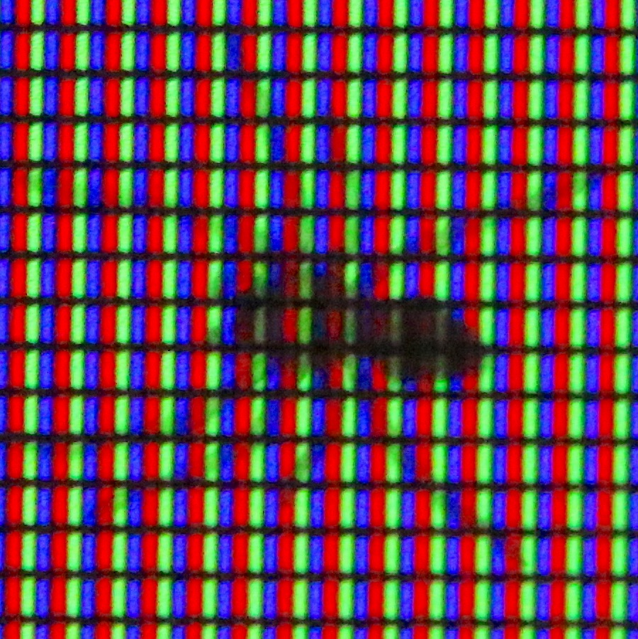 spider in computer screen