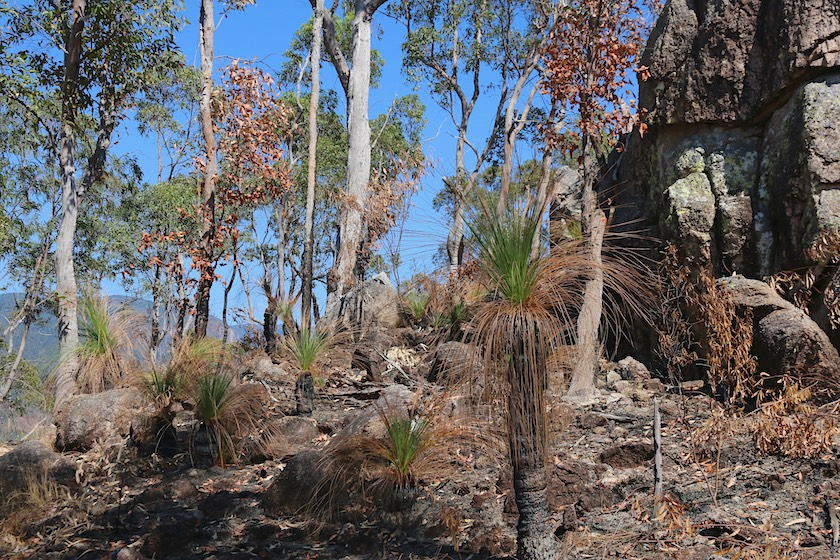 Burnt bushand on Cardwell Lookout