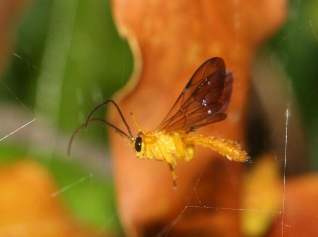 Orange wasp caught in spider's web