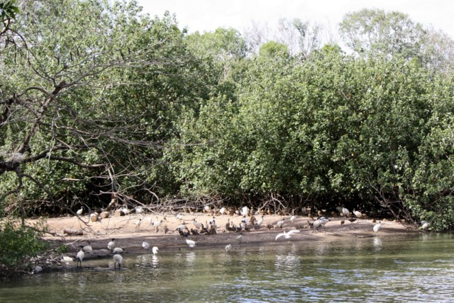 Waterbirds on the edge of the lagoon at Billabong Sanctuary