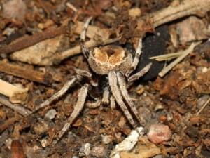 spider on ground, facing