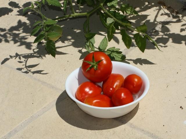 Bowl of mixed tomatoes