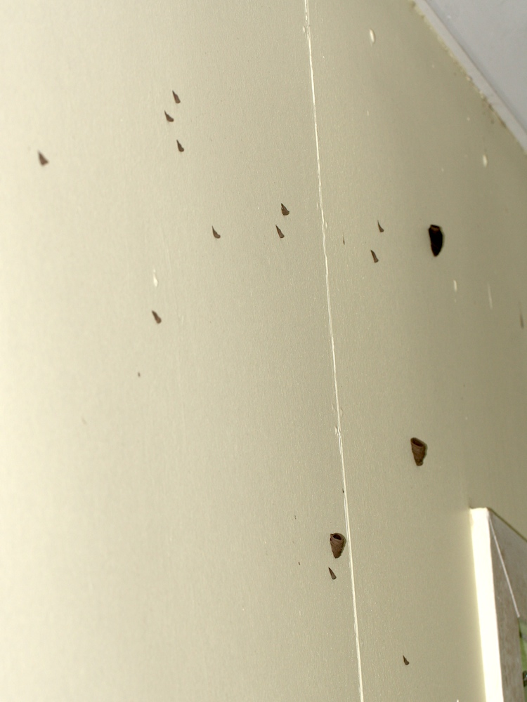 Mud spots and wasp nests on wall