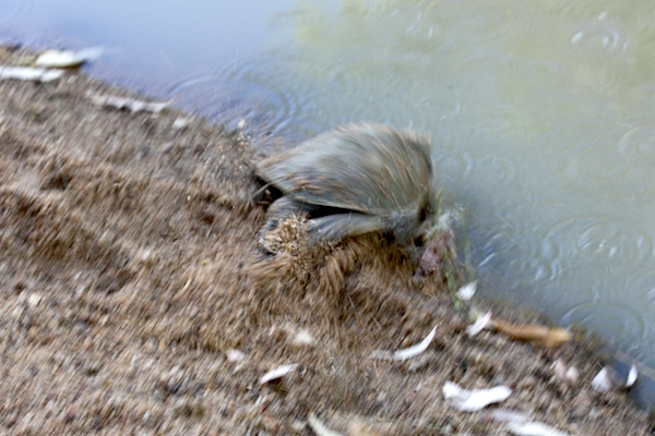 speed-blurred pic of turtle