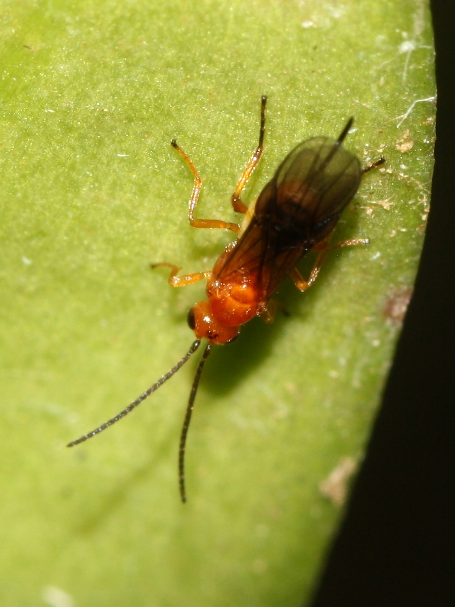 Wasp on orchid leaf
