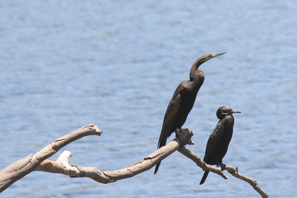 Dark birds perched on a branch