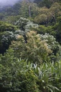 Thick rainforest.