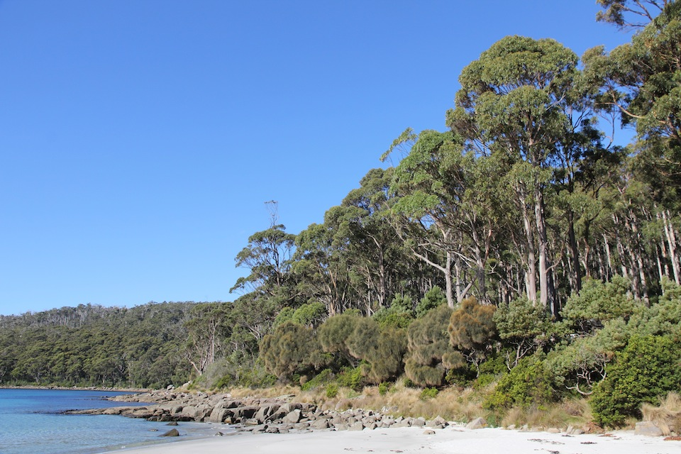 rocky coast backed by forest