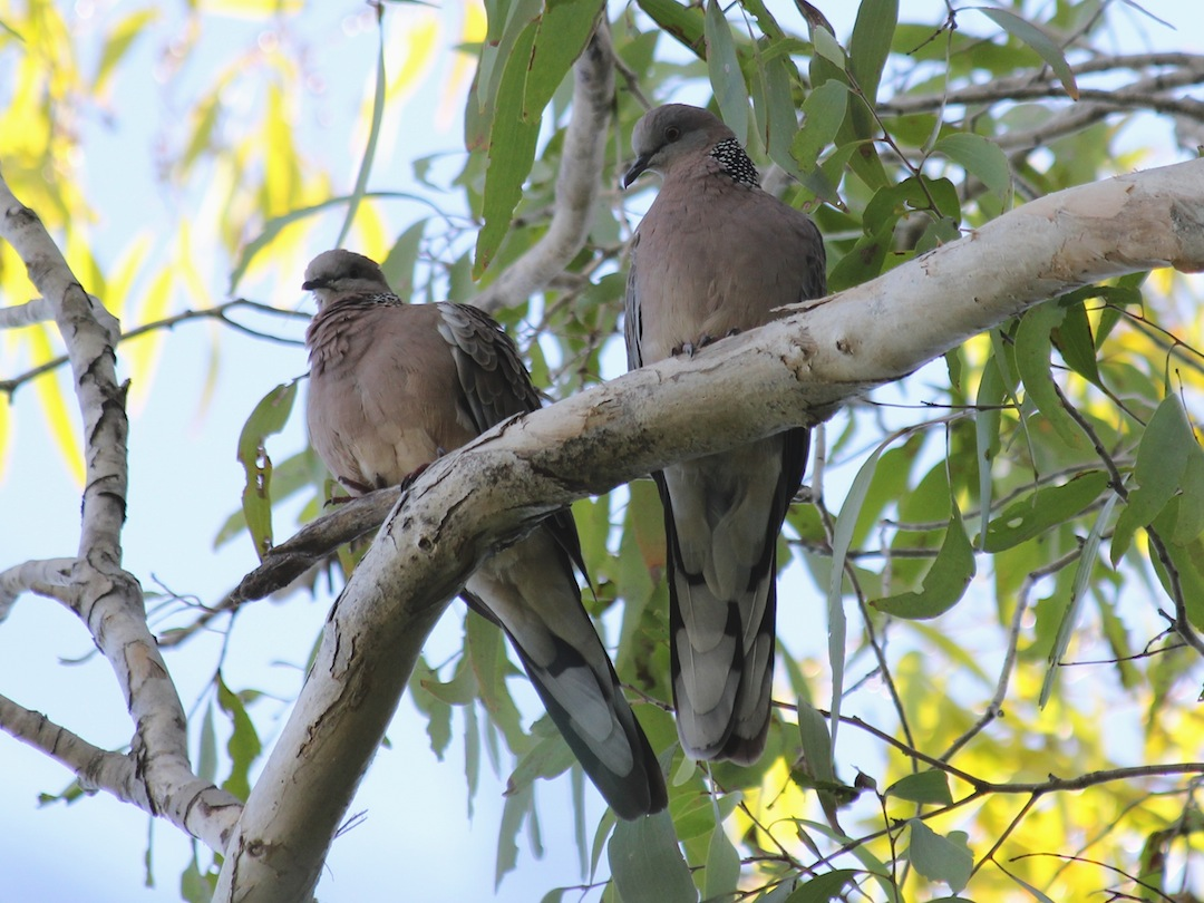pair of birds on branch