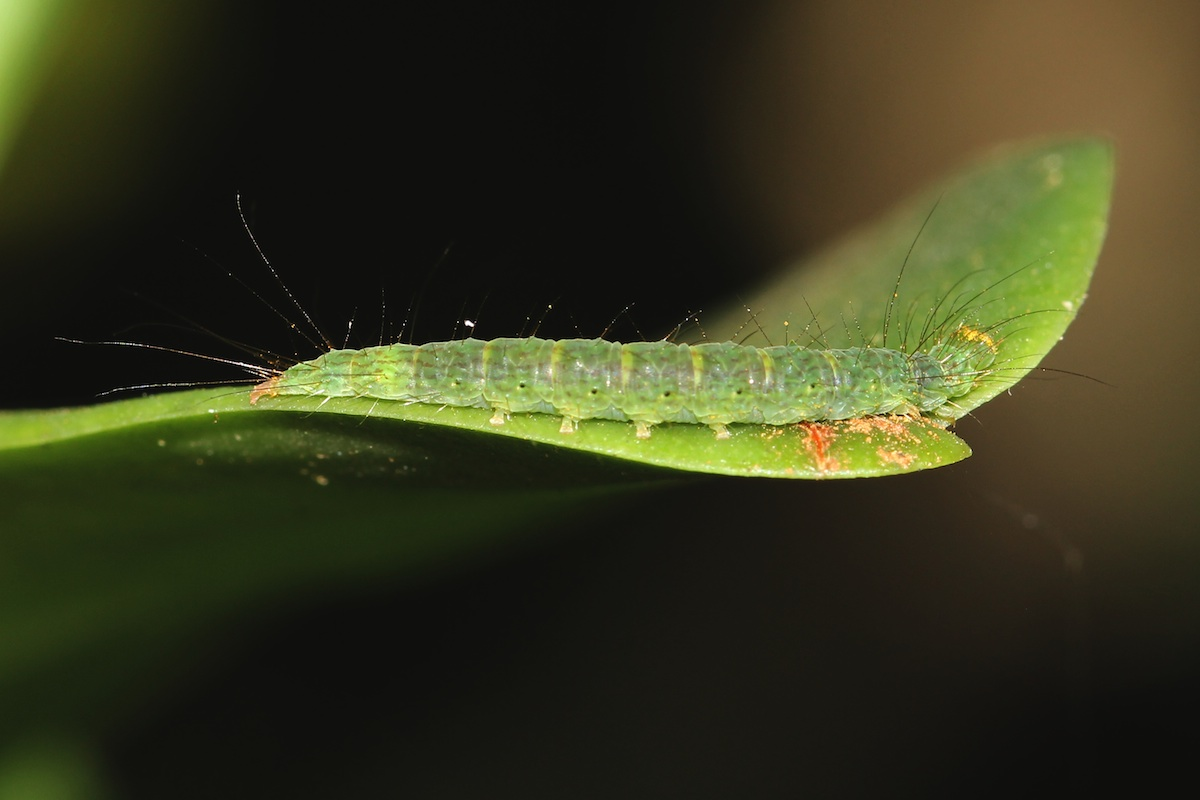 green caterpillar on leaf