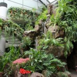 waterfall in butterfly house