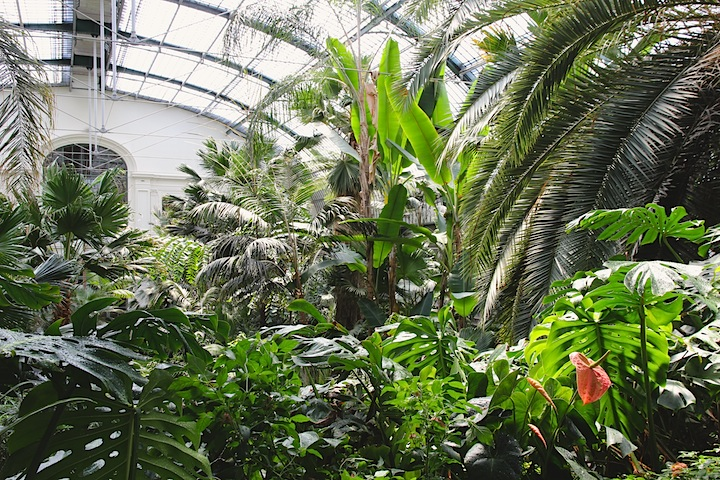 conservatory with palms