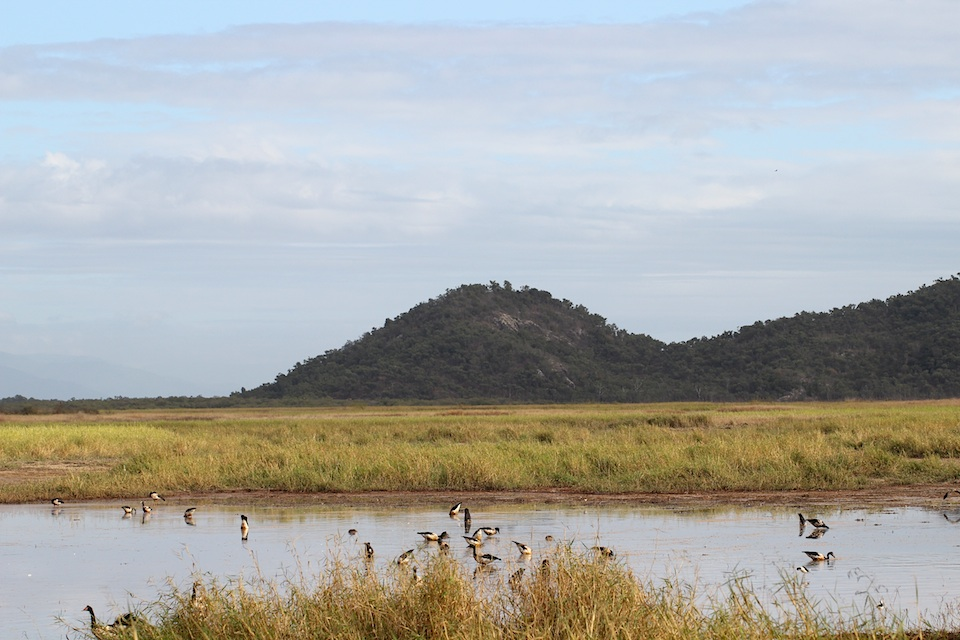 lagoon, reed bed, mountain