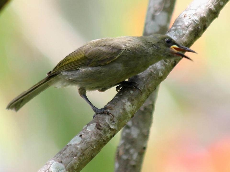 brown bird with beak open
