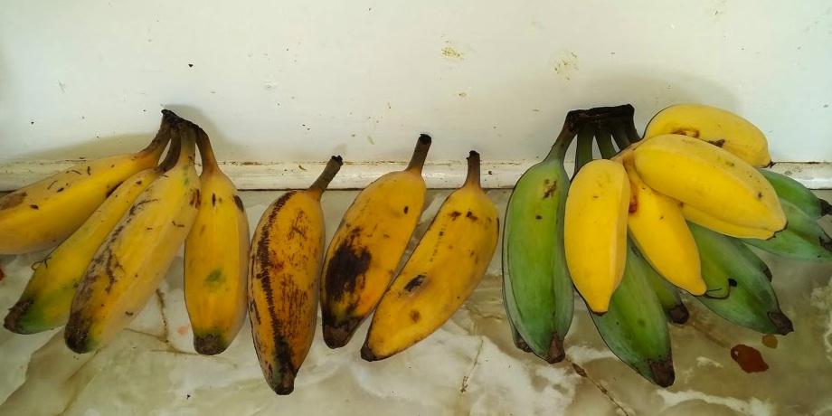 Blue Java and Ducasse bananas