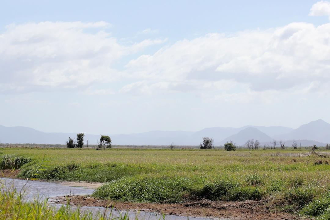 reed beds with distant mountains