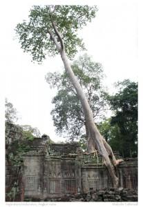 Aspiration/endurance, Angkor ruins, Cambodia