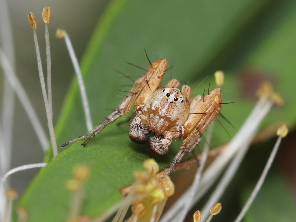 orange-brown spider on leaf