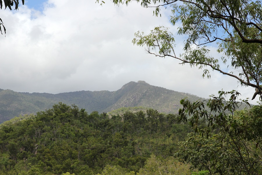 view of forested mountains