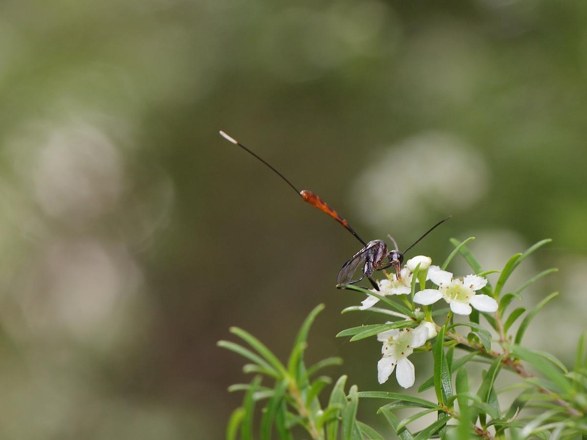 long skinny wasp