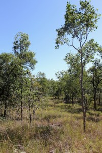 Open woodland between Many Peaks Range and Shelly Beach