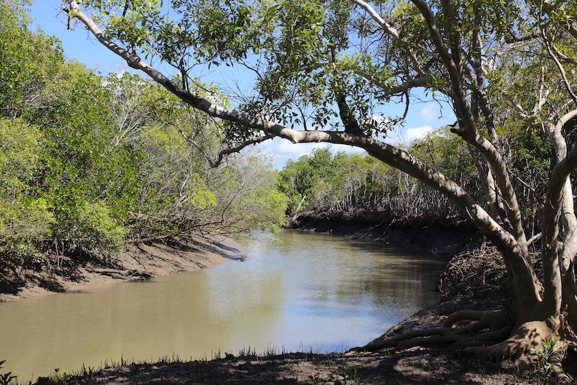 Mangrove Creek at foot of Many Peaks Range