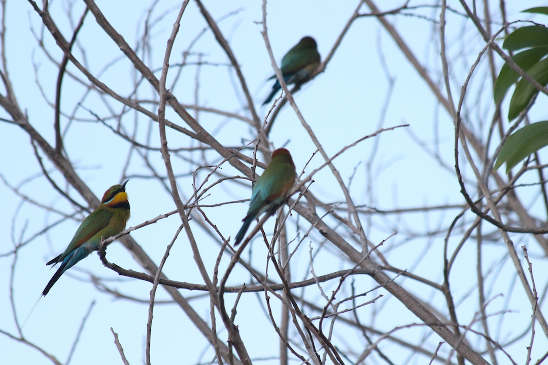 birds on bare twigs
